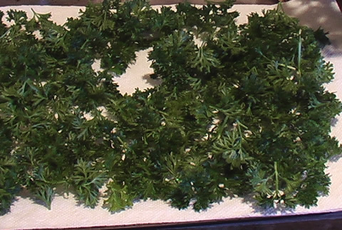 parsley 2 dry