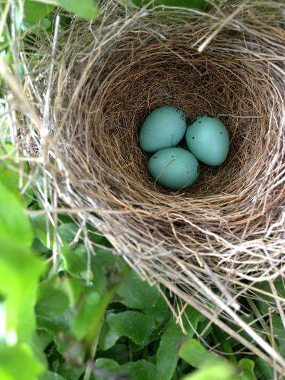 blue Egg Nest - fb capture