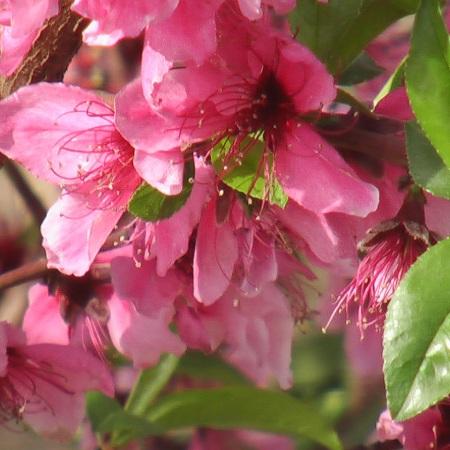 flowering-tree_eld